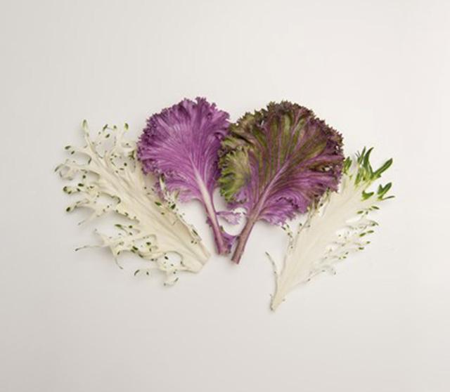 chef garden exotic kale-2