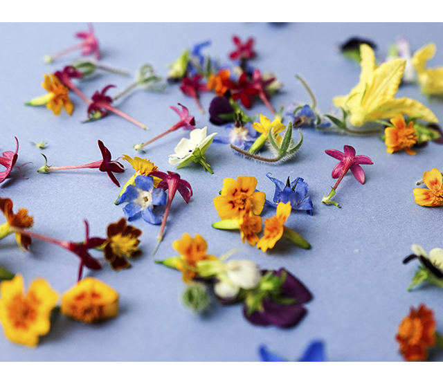 chefs garden edible flowers-2