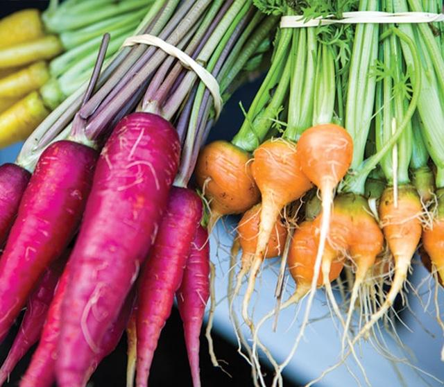 harpke carrots 1-2