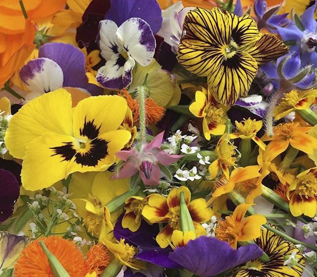 harpke flowers-2