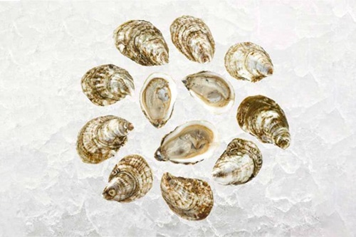 shoreside support blue point oysters-2