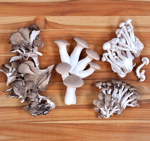 shoreside support chef mix mushroom-2